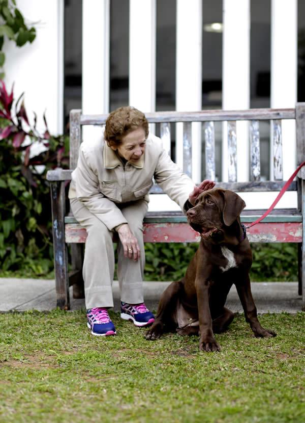 Pet com Animais